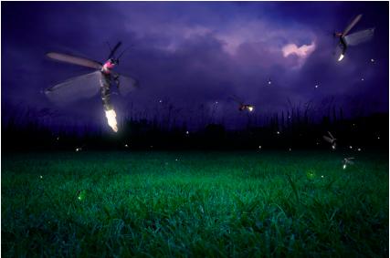 Night light in flight